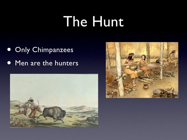 The Hunt • Only Chimpanzees • Men are the hunters