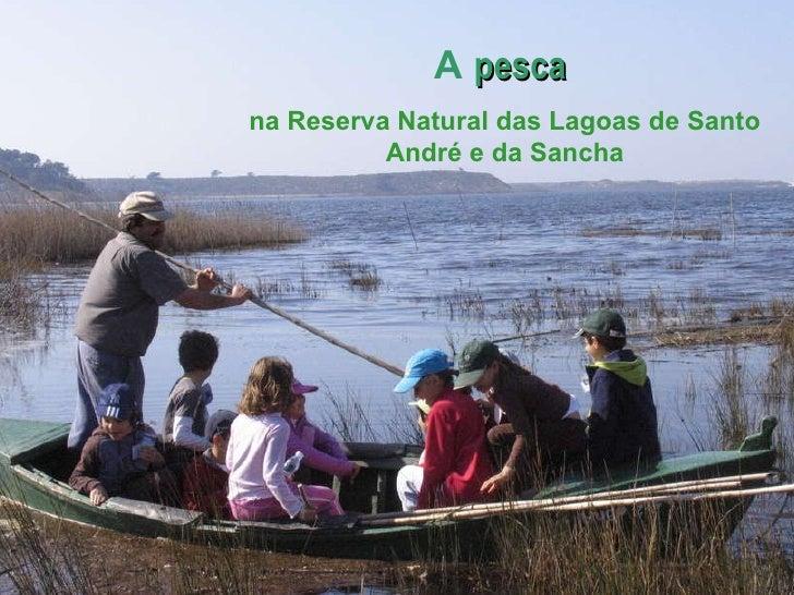 A pesca na Reserva Natural das Lagoas de Santo André e da Sancha A  pesca  na Reserva Natural das Lagoas de Santo André e ...