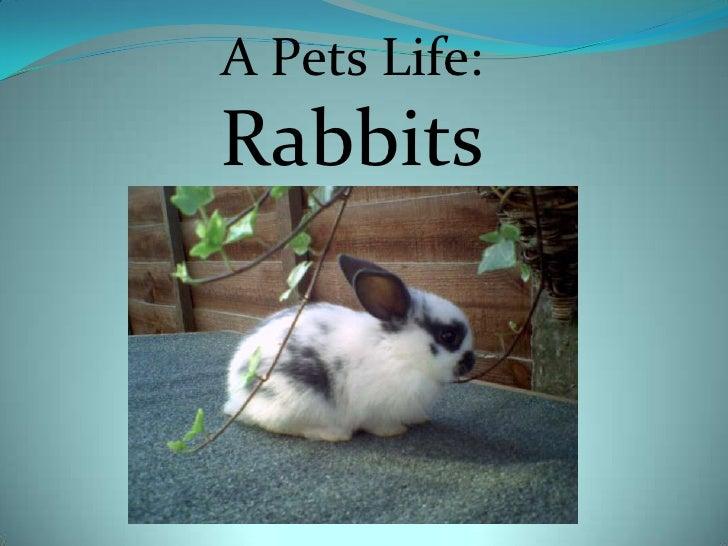 A Pets Life:<br />Rabbits<br />