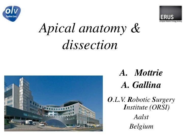 Apicalanatomy & dissection<br />Mottrie<br />A. Gallina<br />O.L.V. RoboticSurgeryInstitute (ORSI)<br />Aalst<br />Belgium...