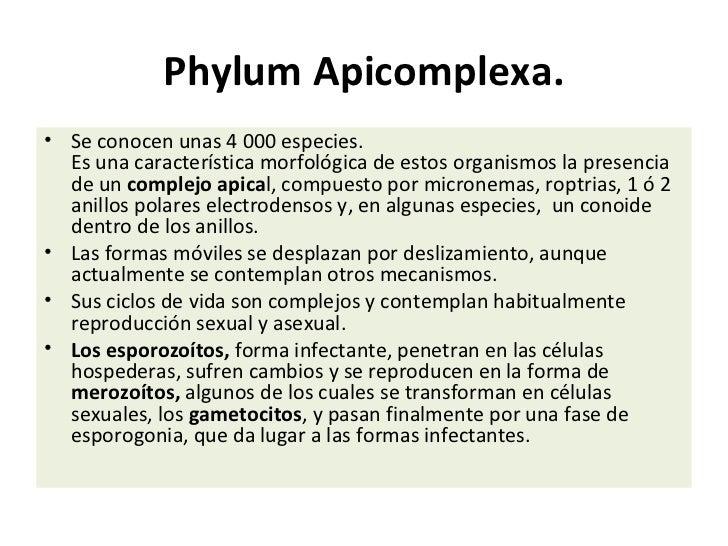 Phylum Apicomplexa.• Se conocen unas 4 000 especies.  Es una característica morfológica de estos organismos la presencia  ...