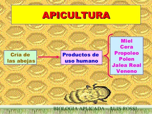 APICULTURA  Cría de las abejas  Productos de uso humano  Miel Cera Propoleo Polen Jalea Real Veneno  BIOLOGIA APLICADA - L...