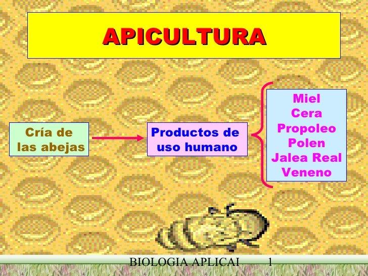 APICULTURA Cría de las abejas Productos de  uso humano Miel Cera Propoleo Polen Jalea Real Veneno