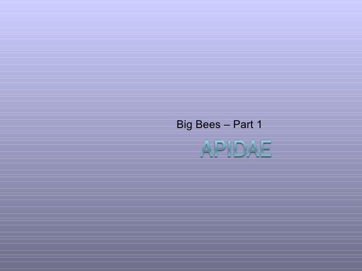 Big Bees – Part 1