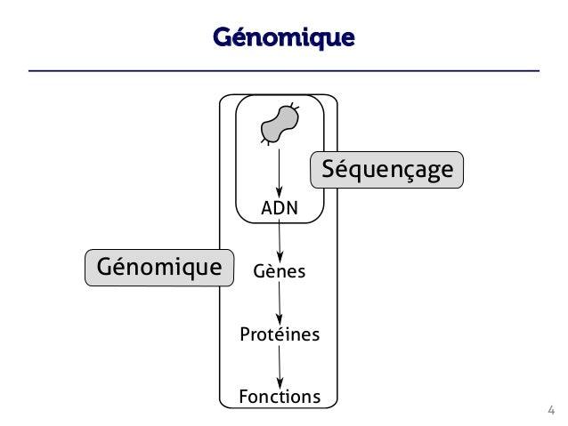 Génomique 4     