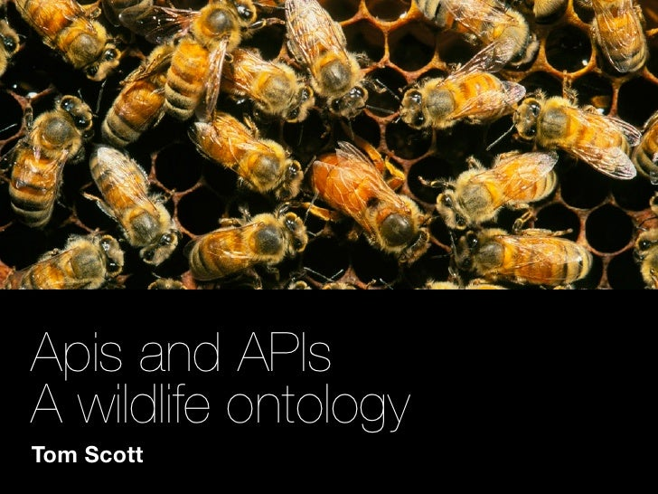 Apis and APIs A wildlife ontology Tom Scott