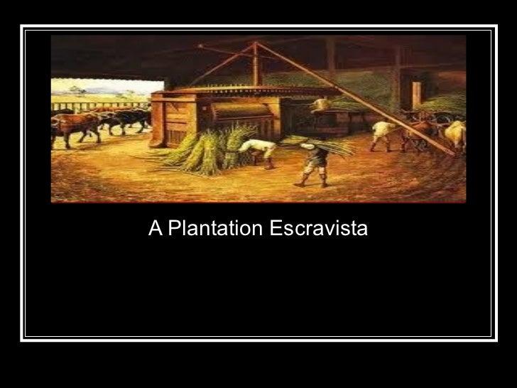 A Plantation Escravista A Plantation Escravista