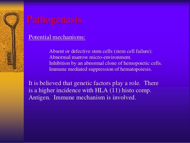 Pathogenesis (Cont…) The latest theory is: there is an intrinsic derangement of hemopoietic proliferative capacity, which ...