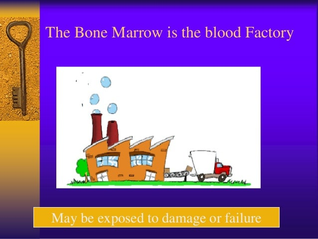 The Bone Marrow is the blood Factory May be exposed to damage or failure