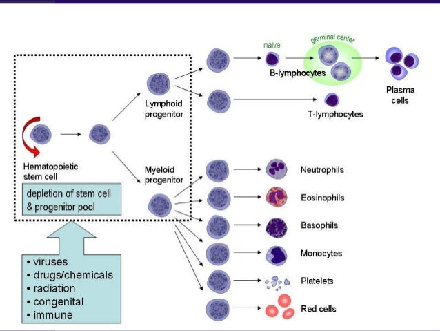 Pancytopenia – What??  Therefore it is the combination of anemia, leukopenia, and thrombocytopenia :- – Hb < 13.5 in male...
