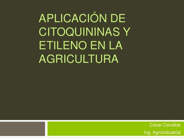 APLICACIÓN DE CITOQUININAS Y ETILENO EN LA AGRICULTURA  César Cevallos  Ing. Agroindustrial