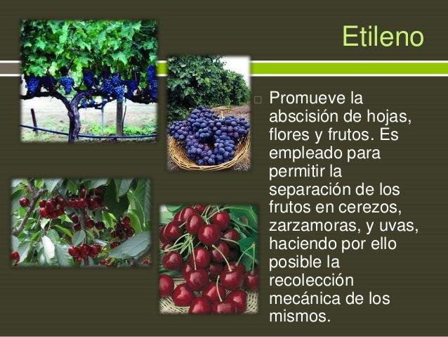 Etileno   Promueve la abscisión de hojas, flores y frutos. Es empleado para permitir la separación de los frutos en cerez...