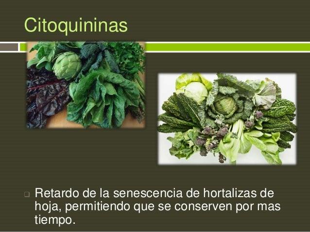 Citoquininas    Retardo de la senescencia de hortalizas de hoja, permitiendo que se conserven por mas tiempo.
