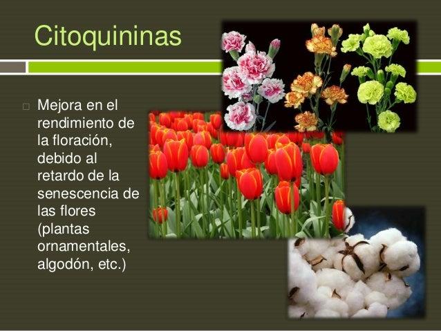 Citoquininas   Mejora en el rendimiento de la floración, debido al retardo de la senescencia de las flores (plantas ornam...
