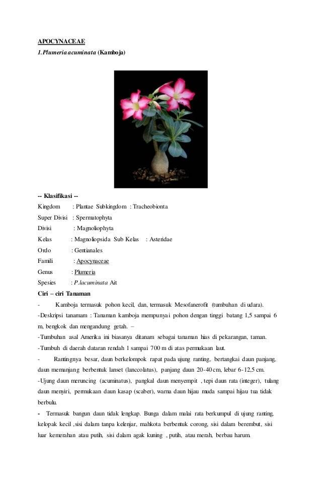 Unduh 107+ Gambar Sel Bunga Alamanda Paling Keren