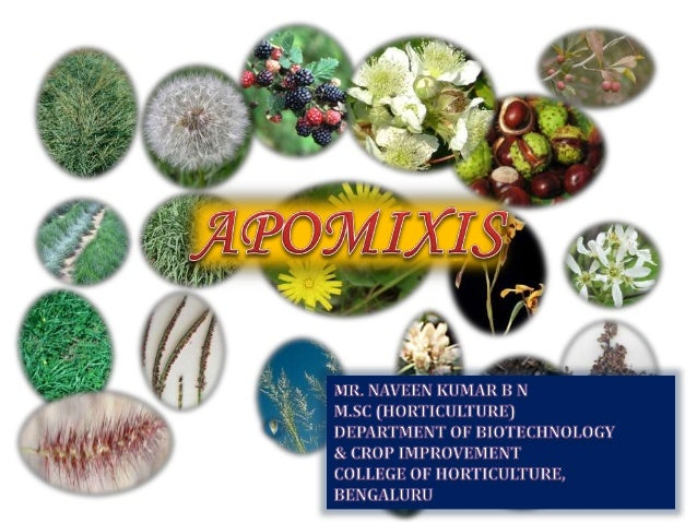 Apomixis asexual plants