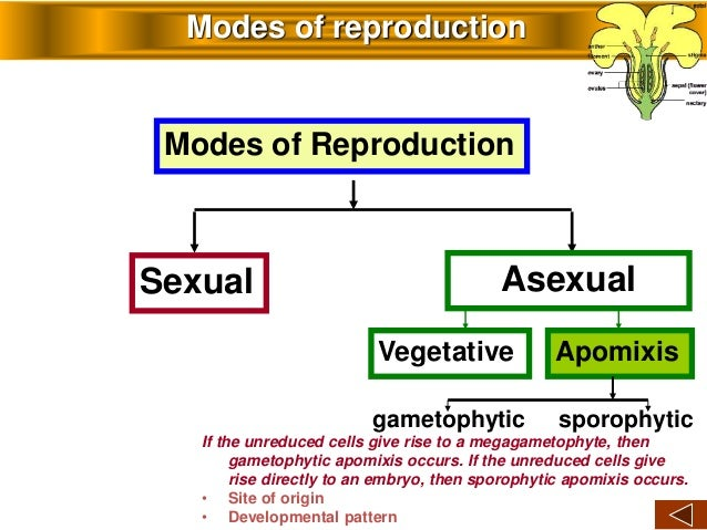 Apomixis asexual