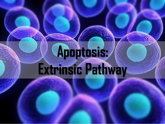 Apoptosis: Extrinsic Pathway  BITS Pilani, Deemed to be University under Section 3 of UGC Act, 1956