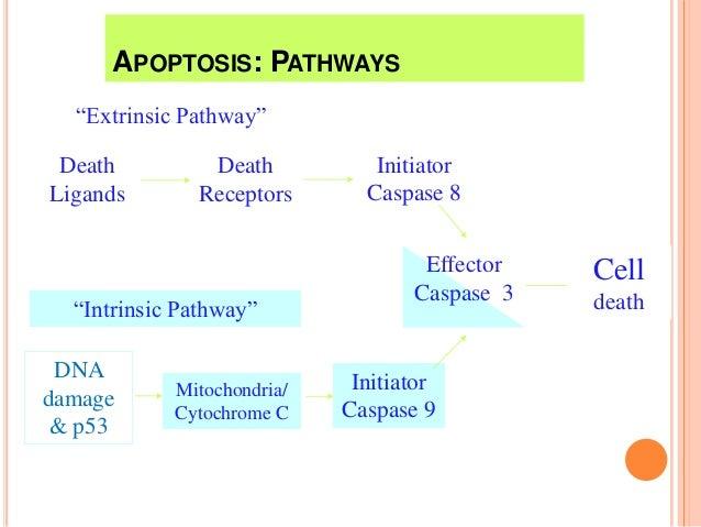Caspase crosstalk: integration of apoptotic and innate immune.
