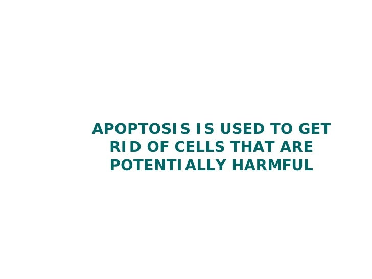 Apoptosis And Necrosis   Year 1