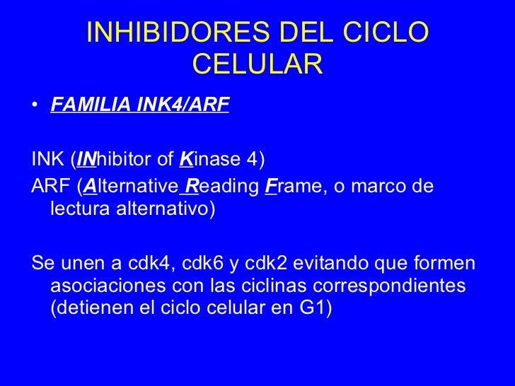 Apoptosis Y Ciclo Celular