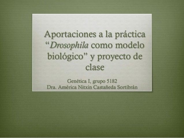 """Aportaciones a la práctica """"Drosophila como modelo biológico"""" y proyecto de clase Genética I, grupo 5182 Dra. América Nitx..."""