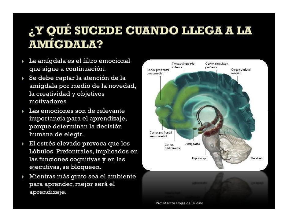La amígdala es el filtro emocionalque sigue a continuación.Se debe captar la atención de laamígdala por medio de la noveda...