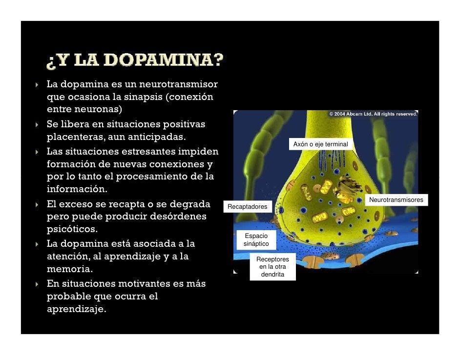 La dopamina es un neurotransmisorque ocasiona la sinapsis (conexiónentre neuronas)Se libera en situaciones positivasplacen...
