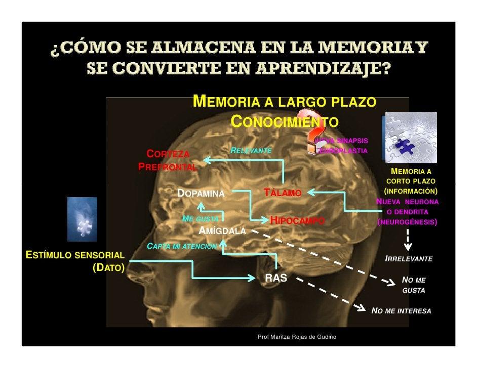 MEMORIA A LARGO PLAZO                                   CONOCIMIENTO                                                      ...