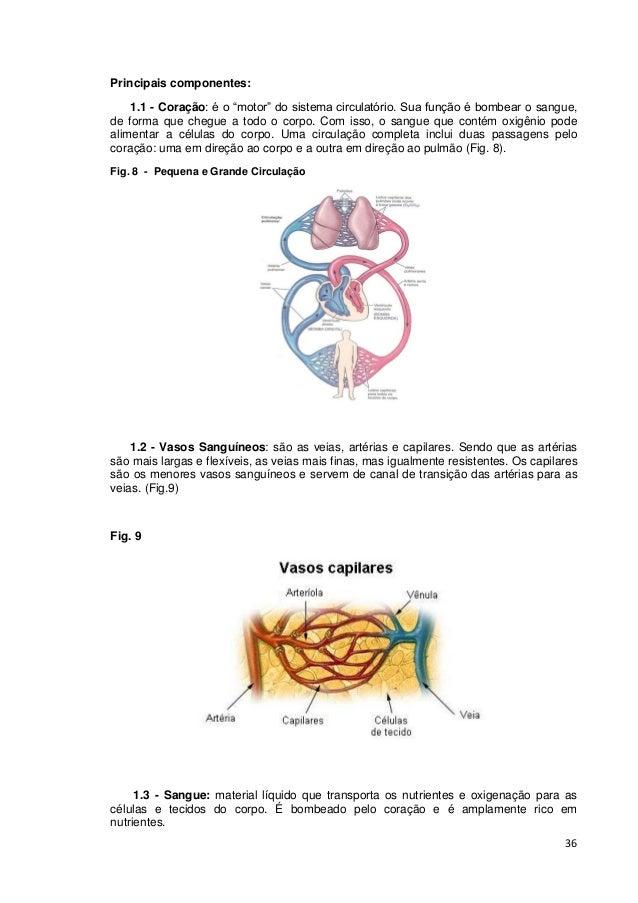 """36 Principais componentes: 1.1 - Coração: é o """"motor"""" do sistema circulatório. Sua função é bombear o sangue, de forma que..."""