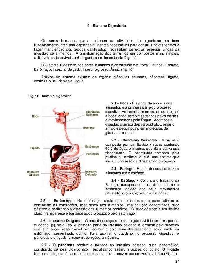37 2 - Sistema Digestório Os seres humanos, para manterem as atividades do organismo em bom funcionamento, precisam captar...