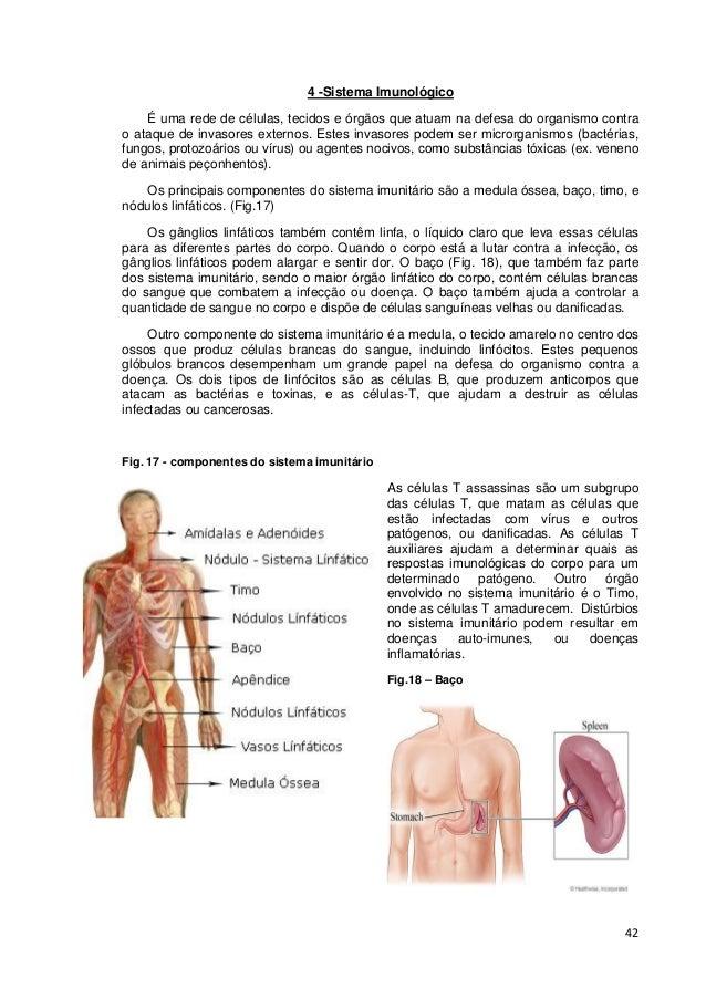 42 4 -Sistema Imunológico É uma rede de células, tecidos e órgãos que atuam na defesa do organismo contra o ataque de inva...