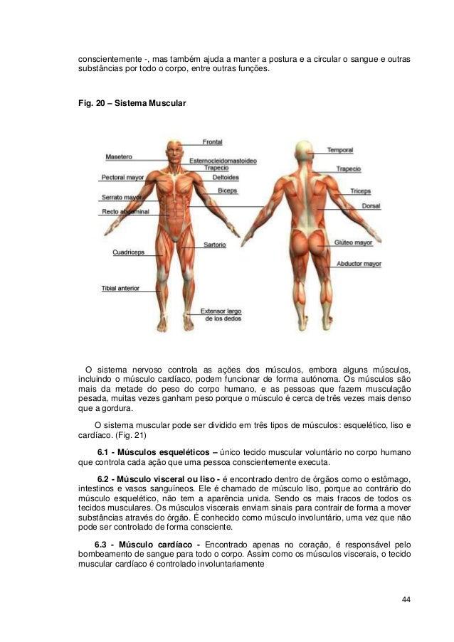 44 conscientemente -, mas também ajuda a manter a postura e a circular o sangue e outras substâncias por todo o corpo, ent...