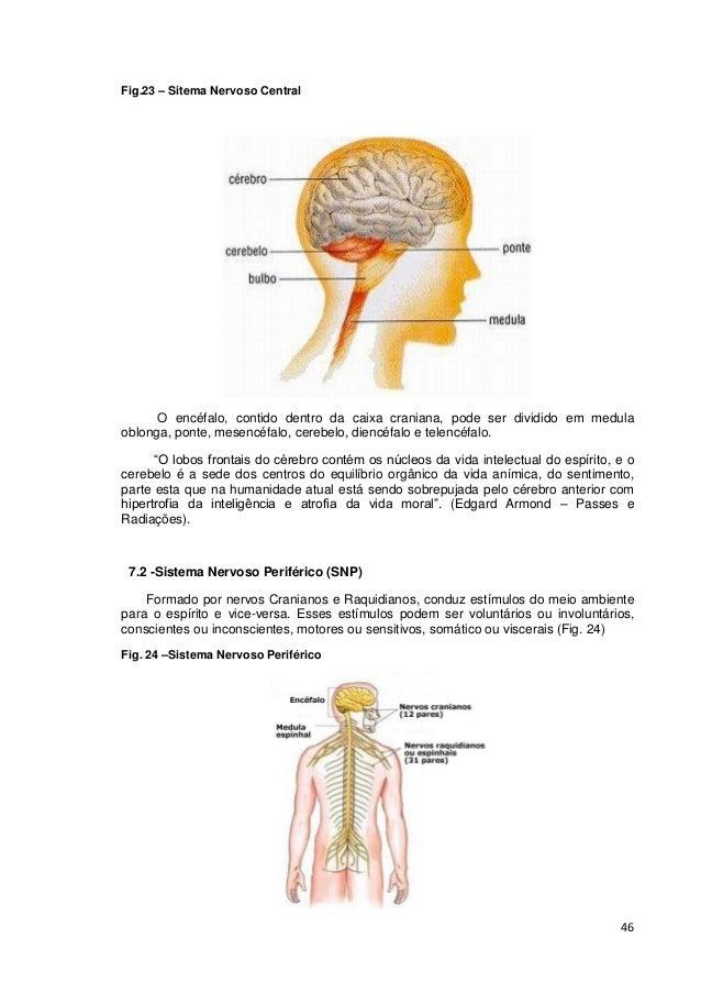 46 Fig.23 – Sitema Nervoso Central O encéfalo, contido dentro da caixa craniana, pode ser dividido em medula oblonga, pont...