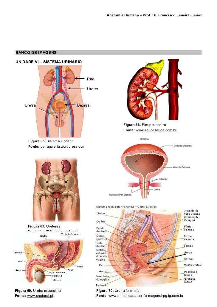 Asombroso Anatomía Aplicada De útero Inspiración - Anatomía de Las ...