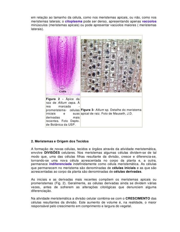 Apostila anatomia vegetal ufu
