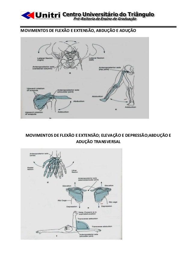 MOVIMENTOS DE FLEXÃO E EXTENSÃO, ABDUÇÃO E ADUÇÃO  MOVIMENTOS DE FLEXÃO E EXTENSÃO; ELEVAÇÃO E DEPRESSÃO;ABDUÇÃO E        ...