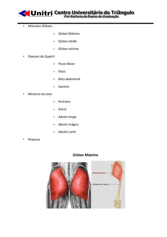 •   Músculos Glúteos                       – Glúteo Máximo                       – Glúteo médio                       – Gl...