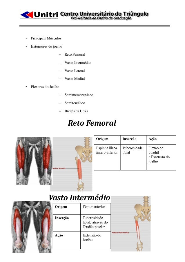 •   Principais Músculos•   Extensores do joelho                     – Reto Femoral                     – Vasto Intermédio ...