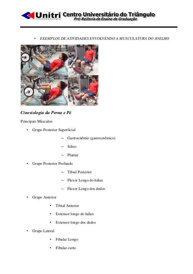 •   EXEMPLOS DE ATIVIDADES ENVOLVENDO A MUSCULATURA DO JOELHOCinesiologia da Perna e PéPrincipais Músculos   •   Grupo Pos...