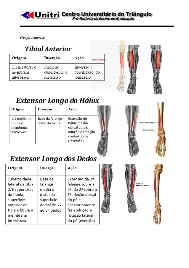 Grupo Anterior    Tibial Anterior Extensor Longo do HáluxExtensor Longo dos Dedos