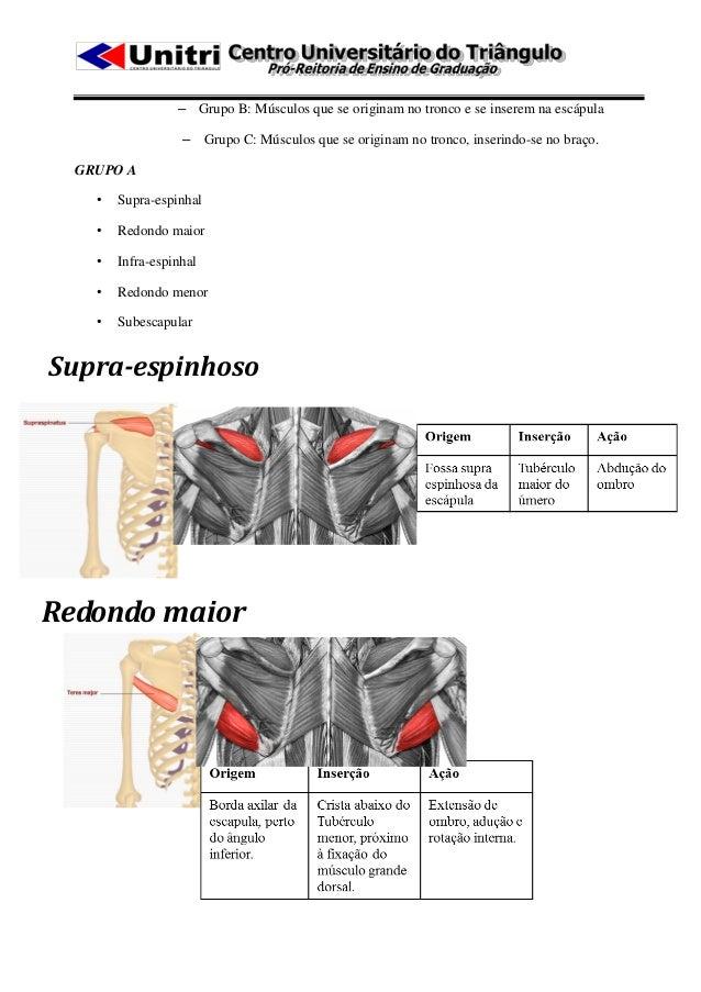 – Grupo B: Músculos que se originam no tronco e se inserem na escápula                   – Grupo C: Músculos que se origin...