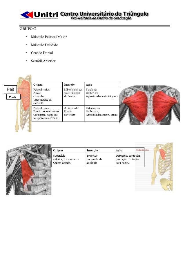 GRUPO C          •   Músculo Peitoral Maior          •   Músculo Deltóide          •   Grande Dorsal          •   Serrátil...