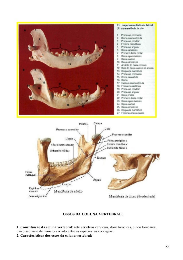 Vistoso Maxilar Y La Mandíbula Anatomía Colección - Imágenes de ...