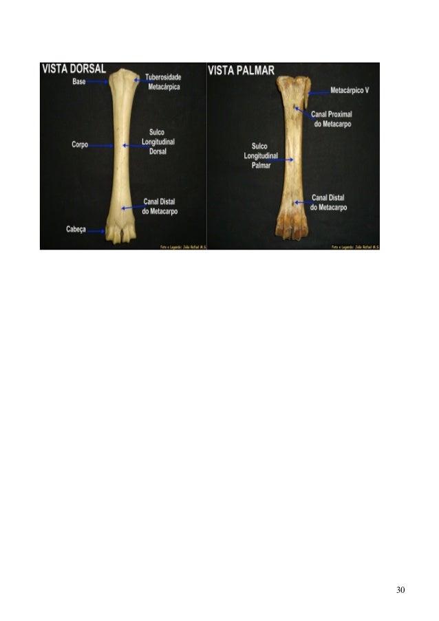 Perfecto Definir Distal En La Anatomía Colección de Imágenes ...