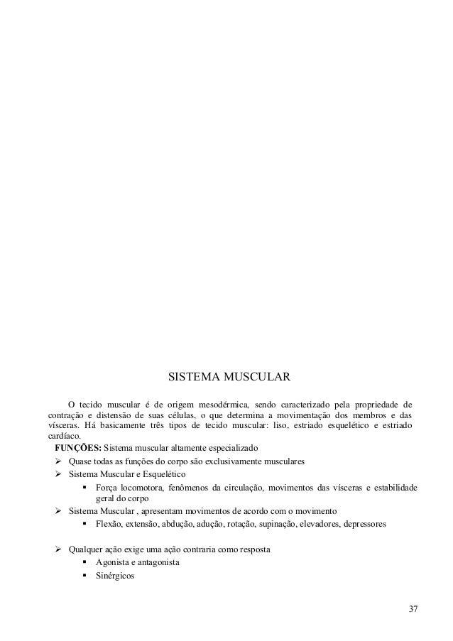 Moderno Antagonista En La Anatomía Imágenes - Anatomía de Las ...