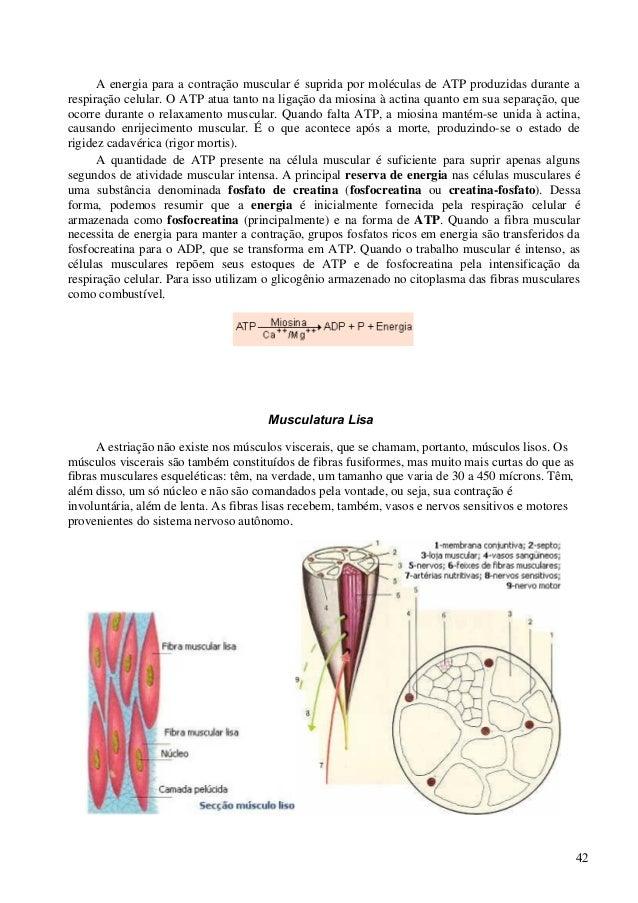 Apostila completa anatomia veterinaria