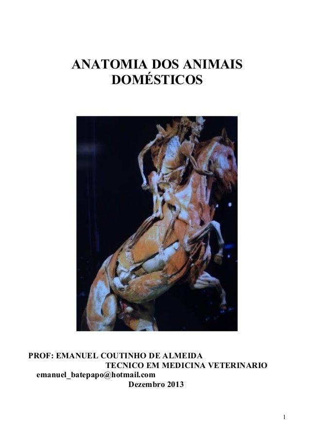 ANATOMIA DOS ANIMAIS DOMÉSTICOS  PROF: EMANUEL COUTINHO DE ALMEIDA TECNICO EM MEDICINA VETERINARIO emanuel_batepapo@hotmai...