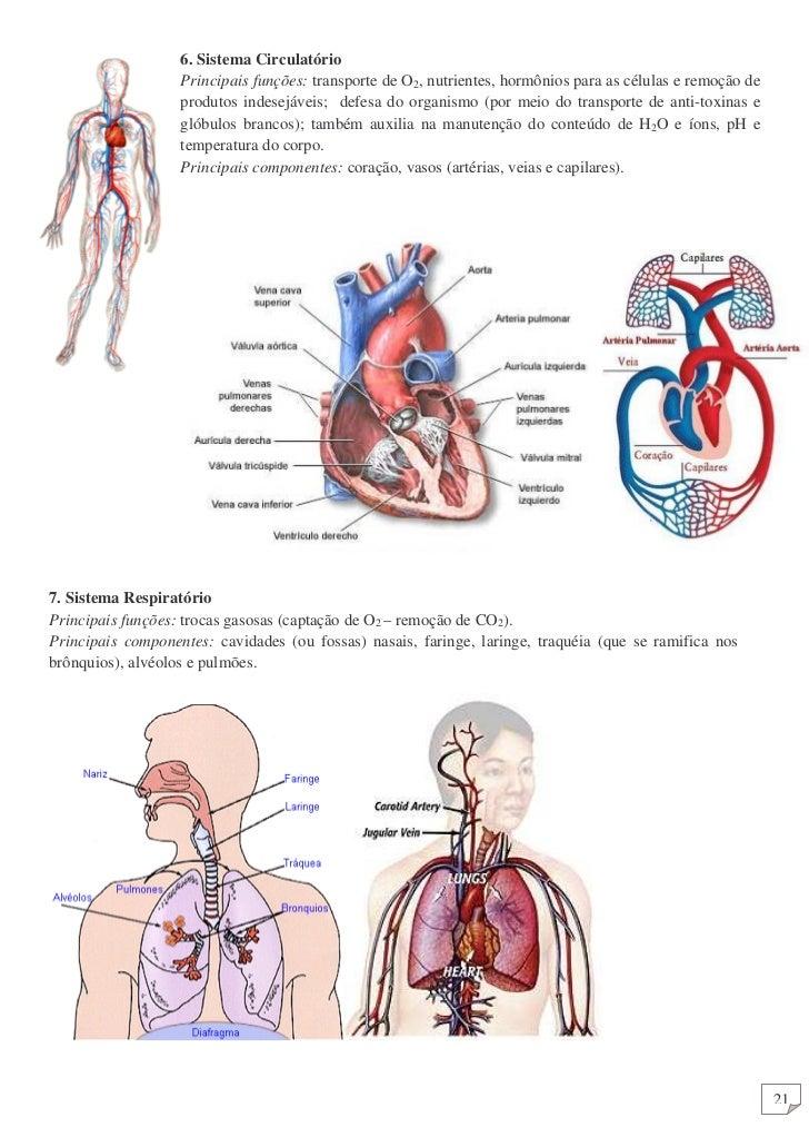 Apostila de Anatomia Humana (produção independente)