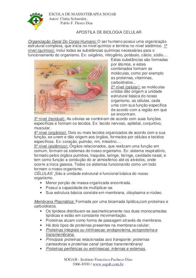 ESCOLA DE MASSOTERAPIA SOGAB Autor: Cíntia Schneider, Pablo F. Flores Dias APOSTILA DE BIOLOGIA CELULAR Organização Geral ...